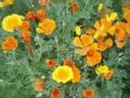 お気に入りの花写真