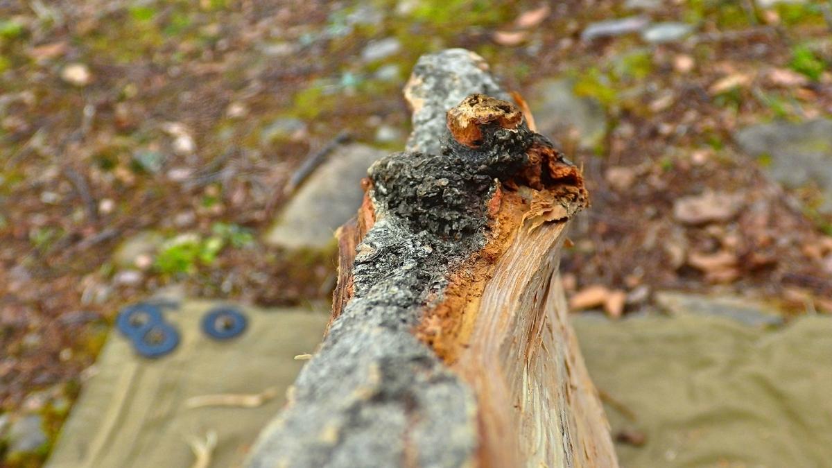 フシで木目が波打っている