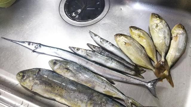 f:id:berao-setouchi-fishing:20190805124102j:image