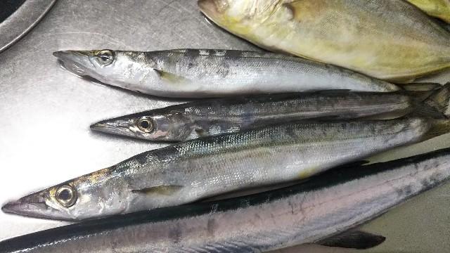 f:id:berao-setouchi-fishing:20190805124618j:image