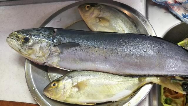 f:id:berao-setouchi-fishing:20190805125707j:image