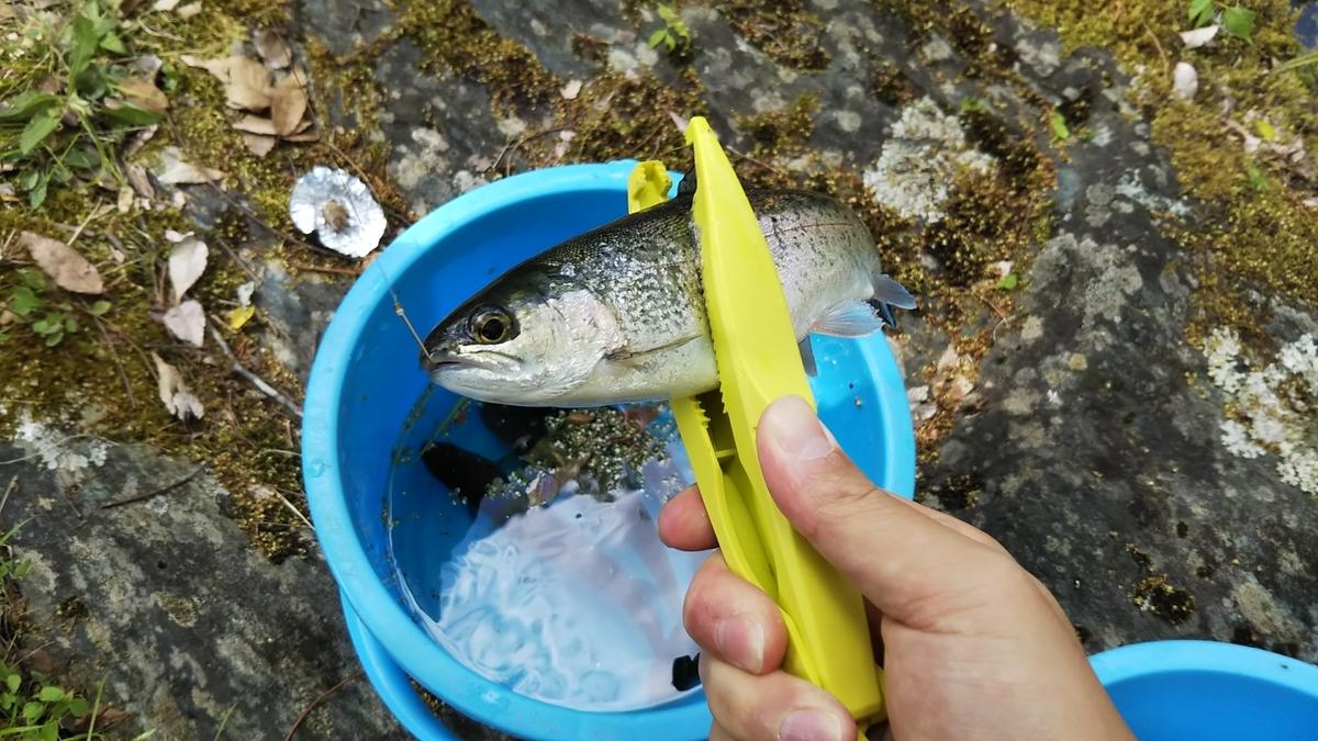 f:id:berao-setouchi-fishing:20190806214553j:plain