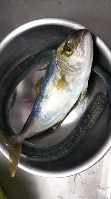 f:id:berao-setouchi-fishing:20190811235753j:image
