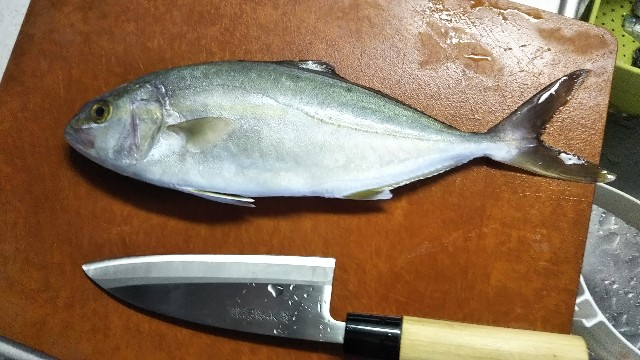 f:id:berao-setouchi-fishing:20190812000023j:image