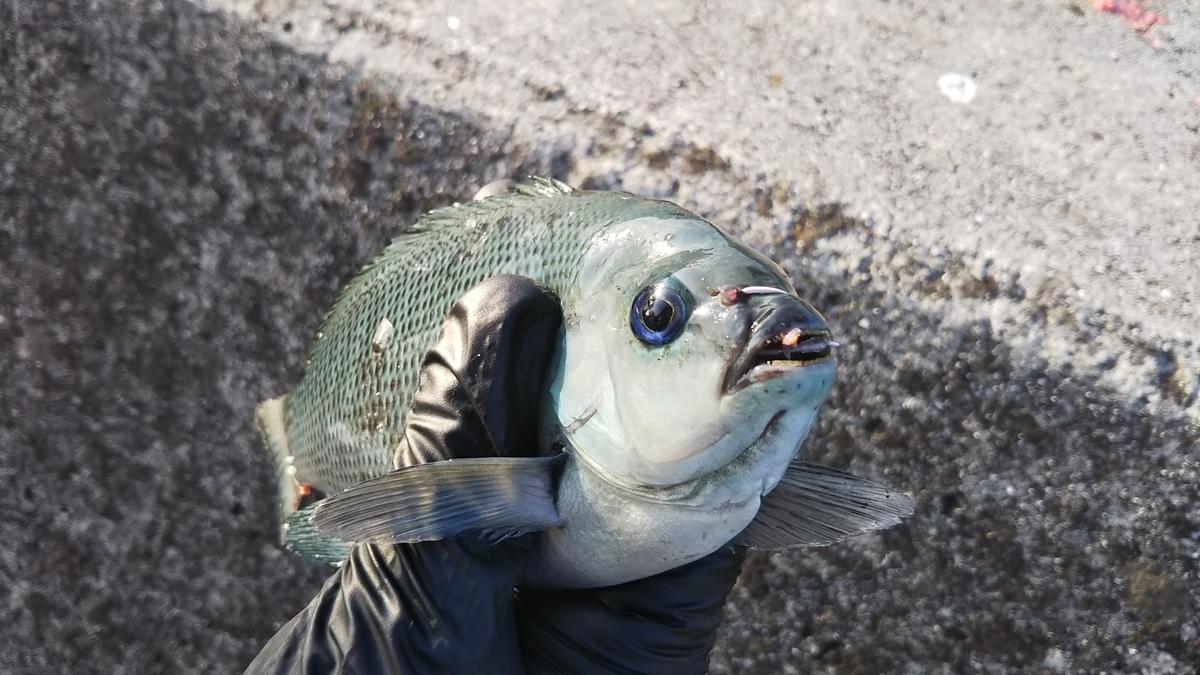 f:id:berao-setouchi-fishing:20191007210210j:plain