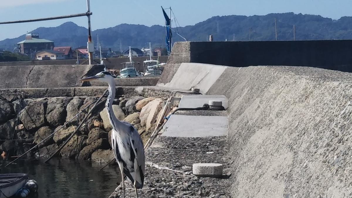 f:id:berao-setouchi-fishing:20191012102036j:plain