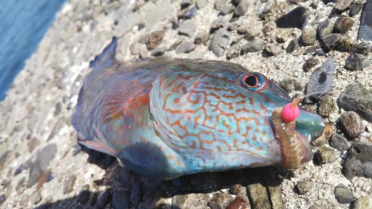 f:id:berao-setouchi-fishing:20191012102107j:plain