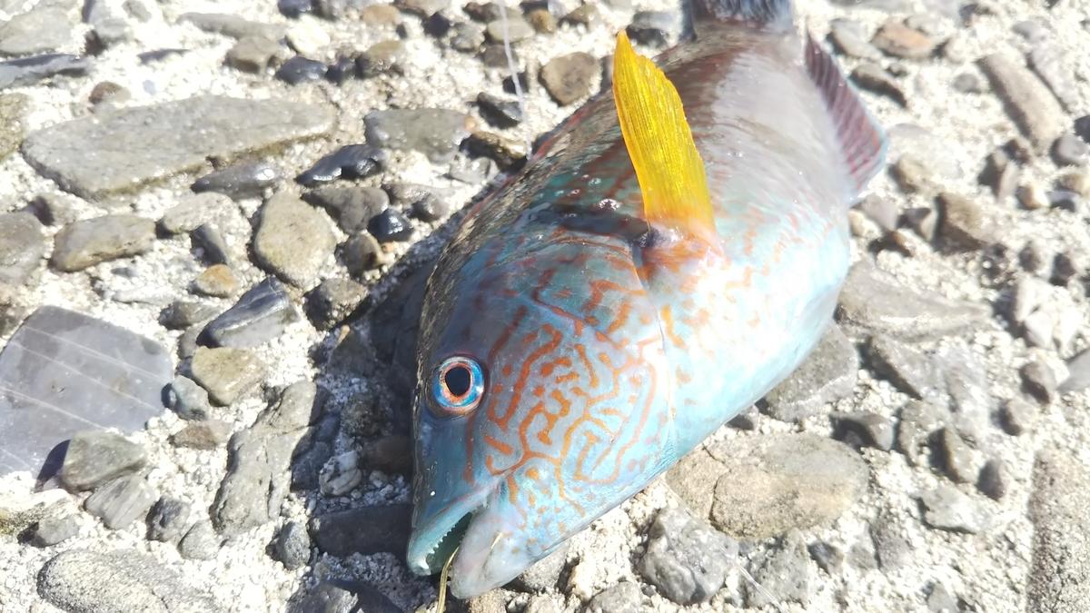 f:id:berao-setouchi-fishing:20191012102138j:plain