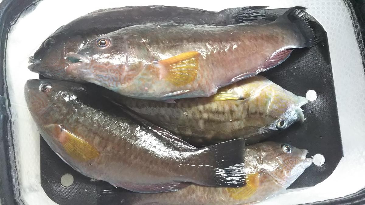 f:id:berao-setouchi-fishing:20191012102229j:plain