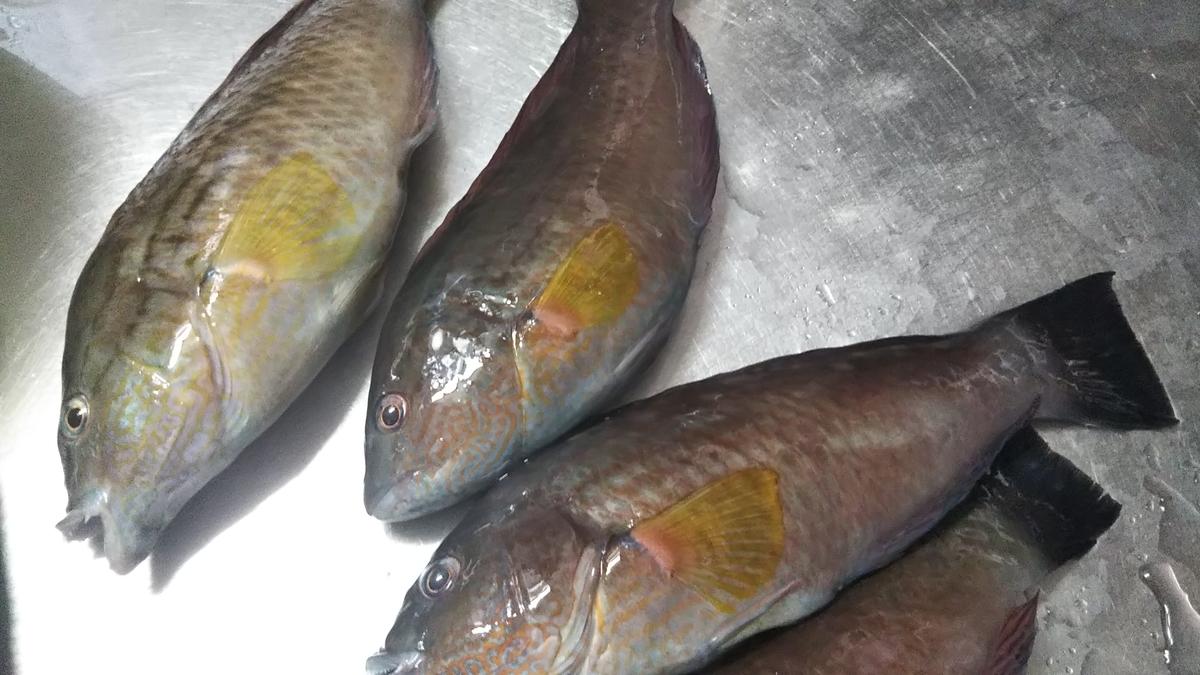 f:id:berao-setouchi-fishing:20191013101004j:plain