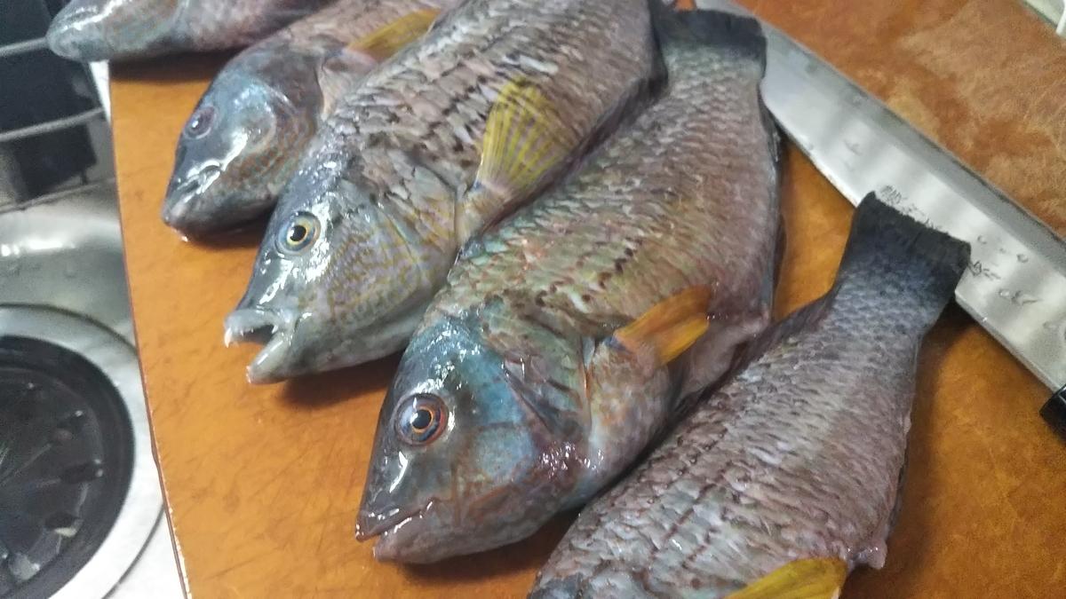 f:id:berao-setouchi-fishing:20191013101032j:plain
