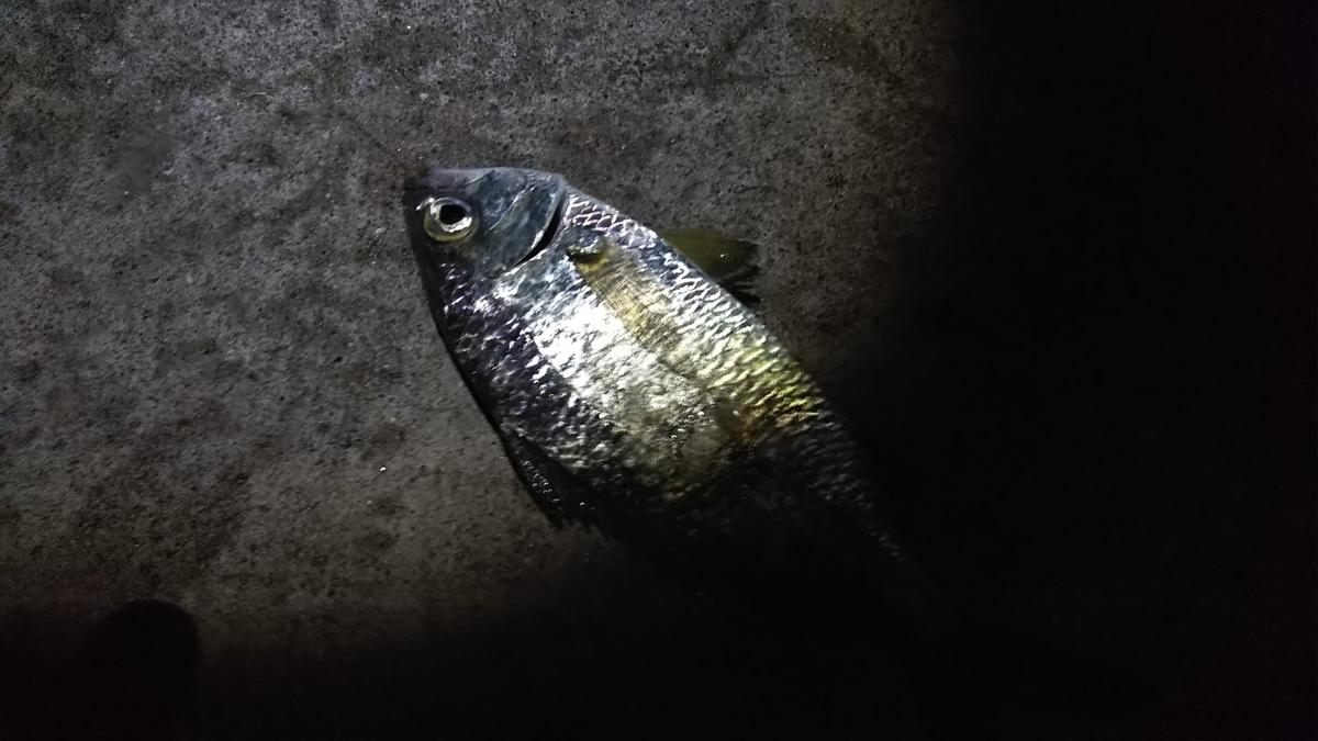 f:id:berao-setouchi-fishing:20191117205242j:plain