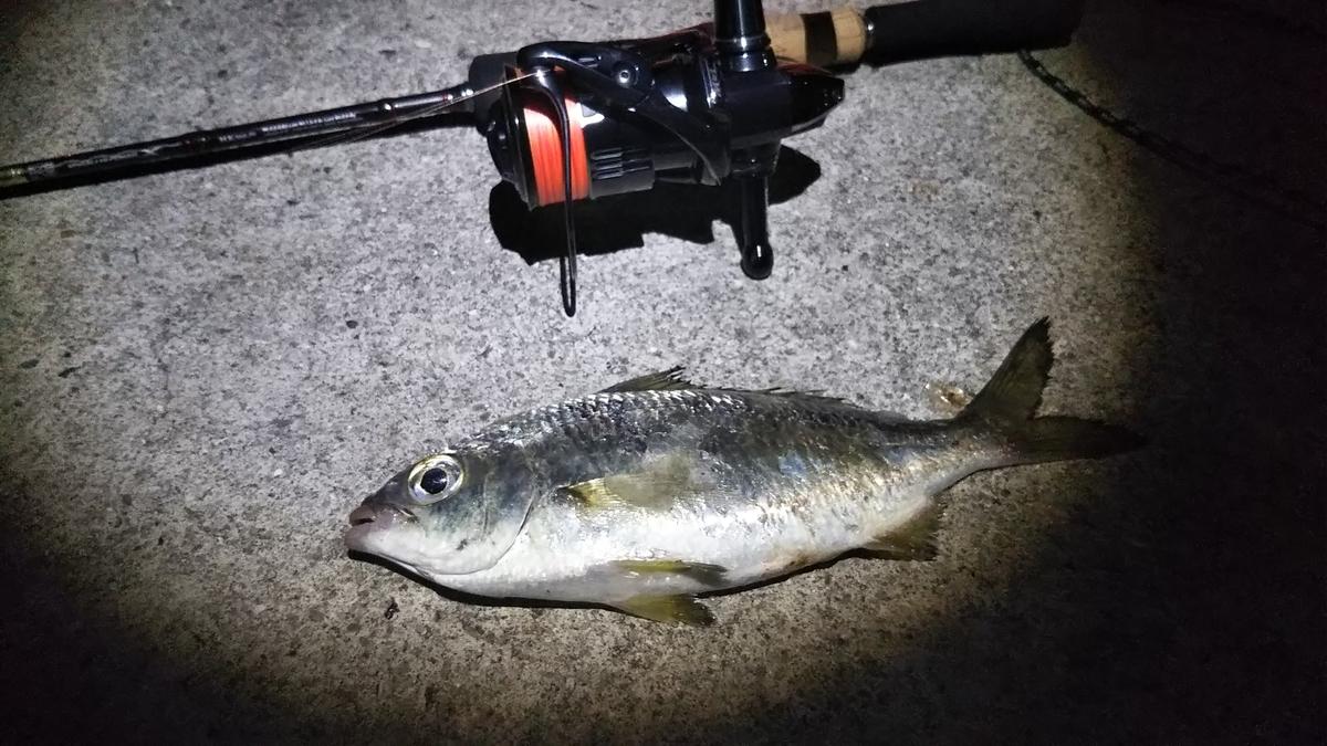 f:id:berao-setouchi-fishing:20191117205254j:plain