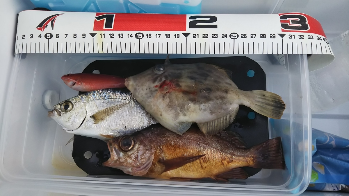 f:id:berao-setouchi-fishing:20191117205624j:plain