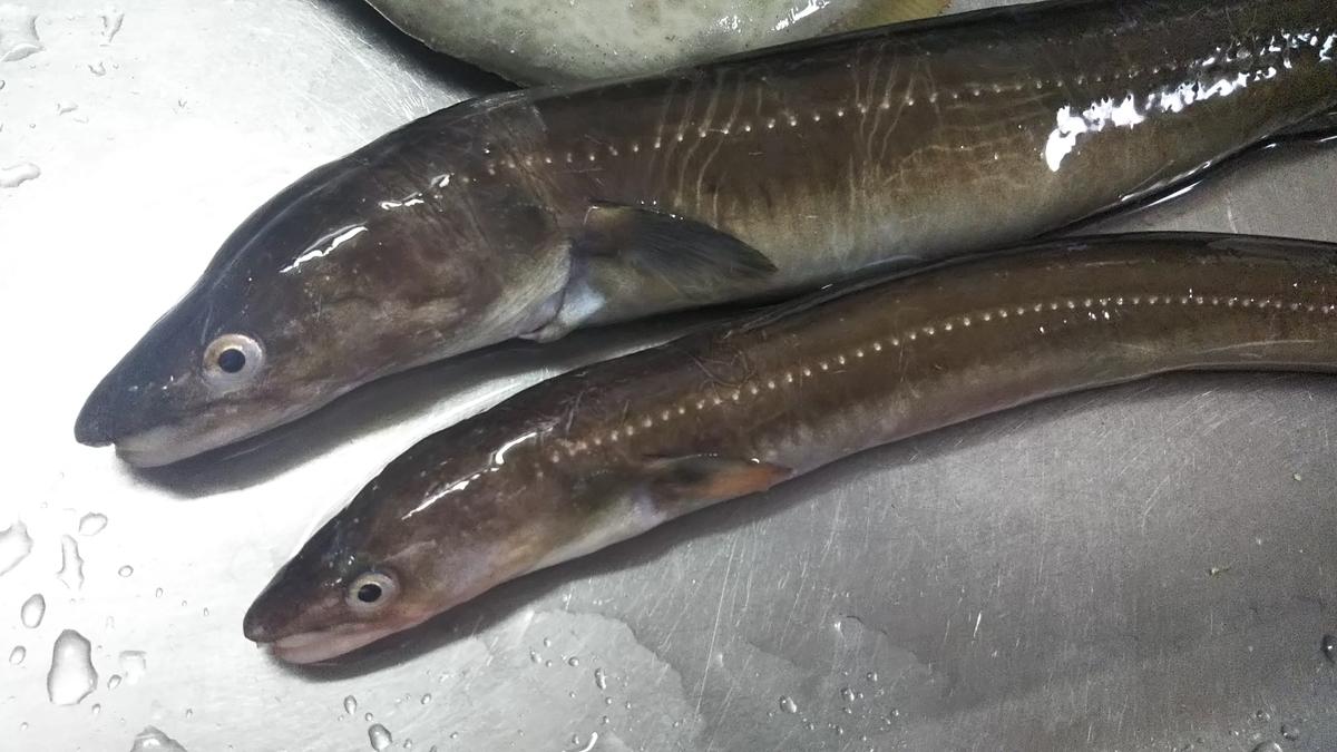 f:id:berao-setouchi-fishing:20191201155712j:plain