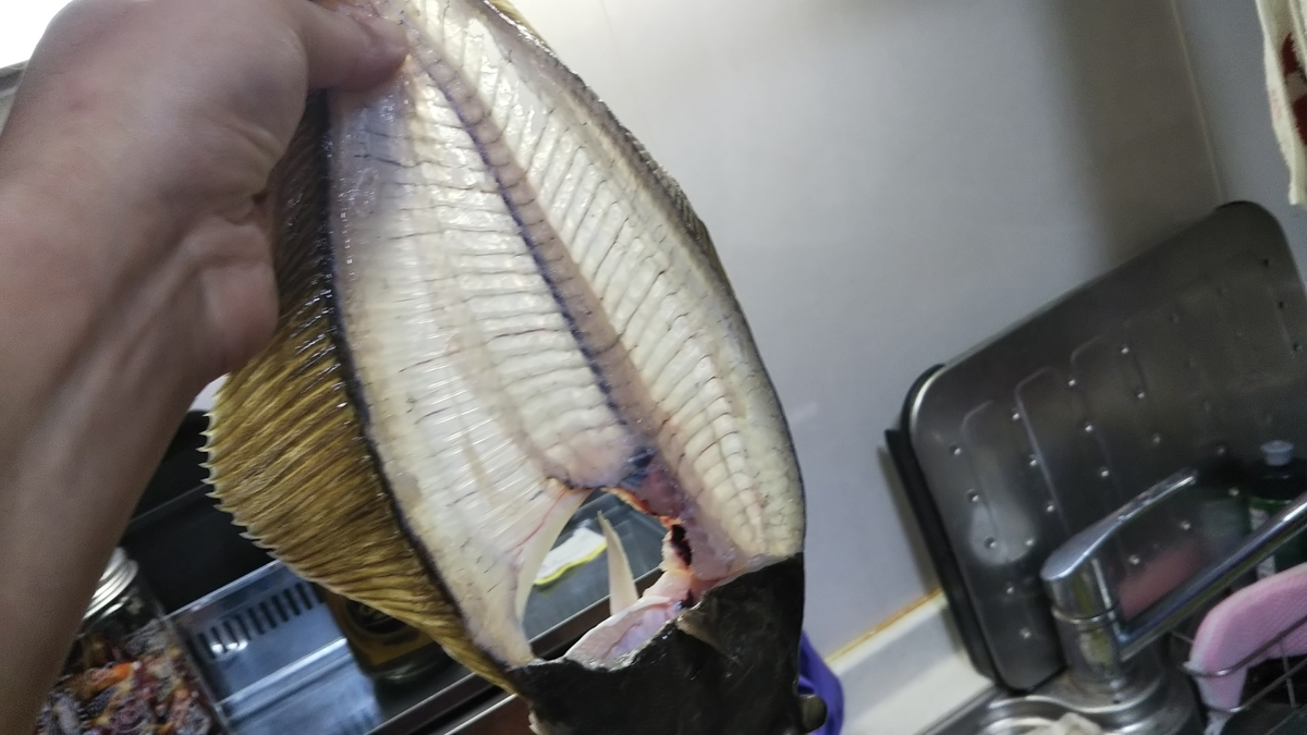 f:id:berao-setouchi-fishing:20191208162934j:plain