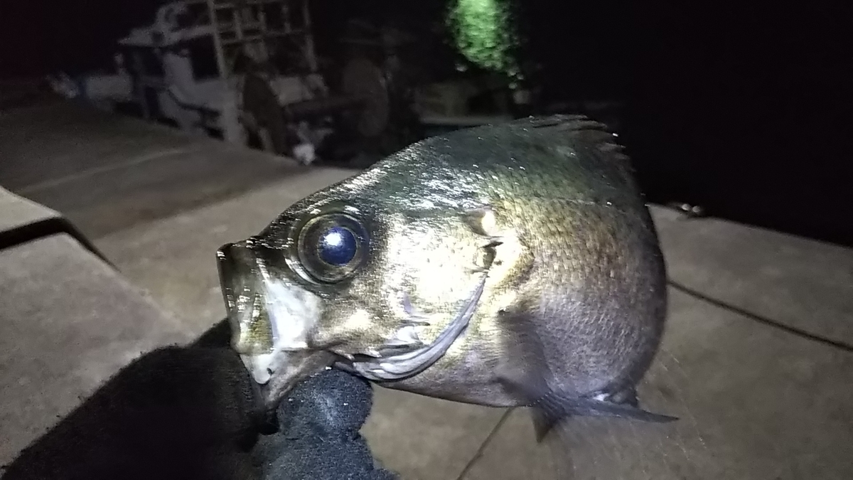 f:id:berao-setouchi-fishing:20200207213551j:plain