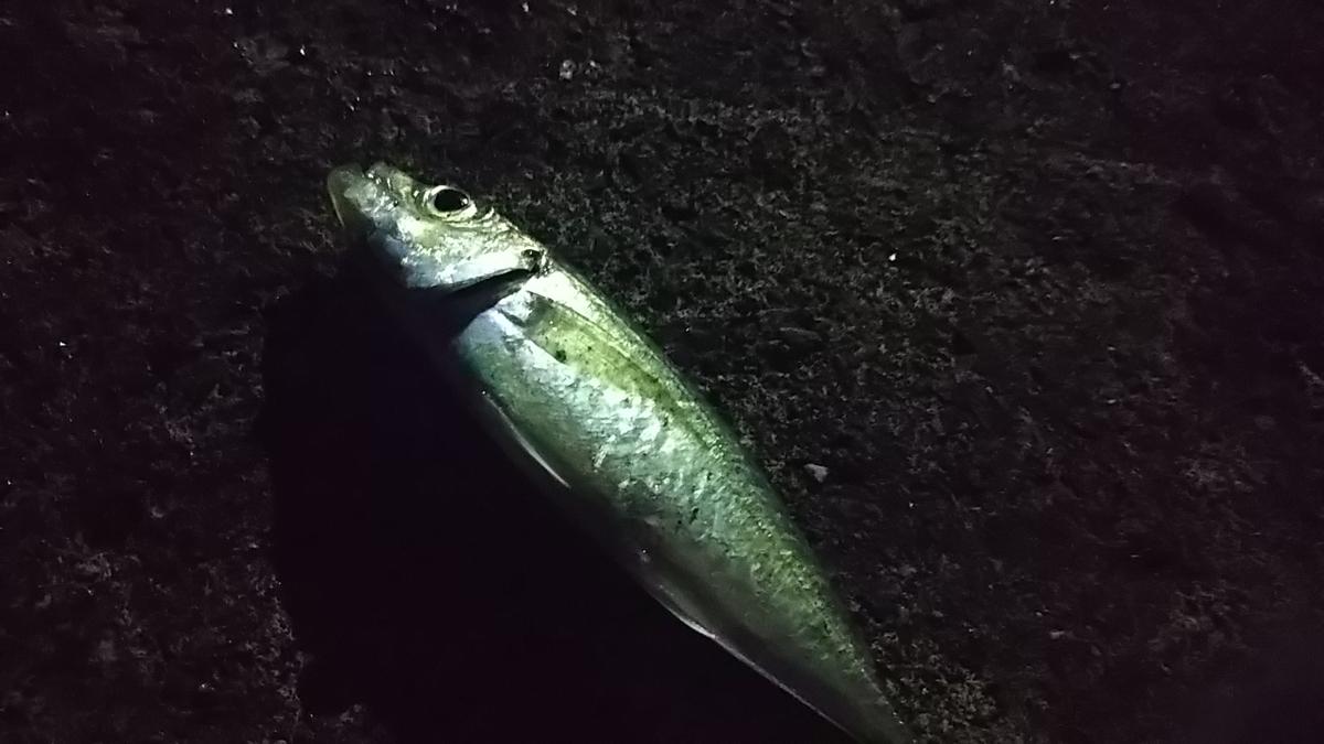 f:id:berao-setouchi-fishing:20200224164326j:plain