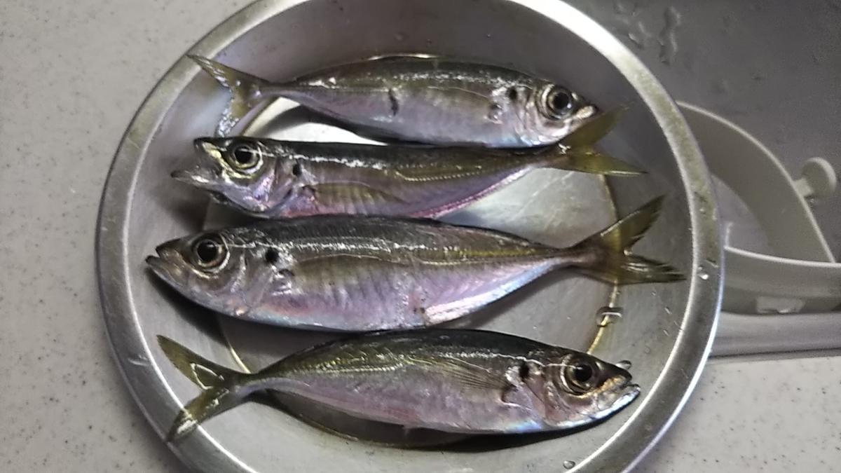f:id:berao-setouchi-fishing:20200224164800j:plain