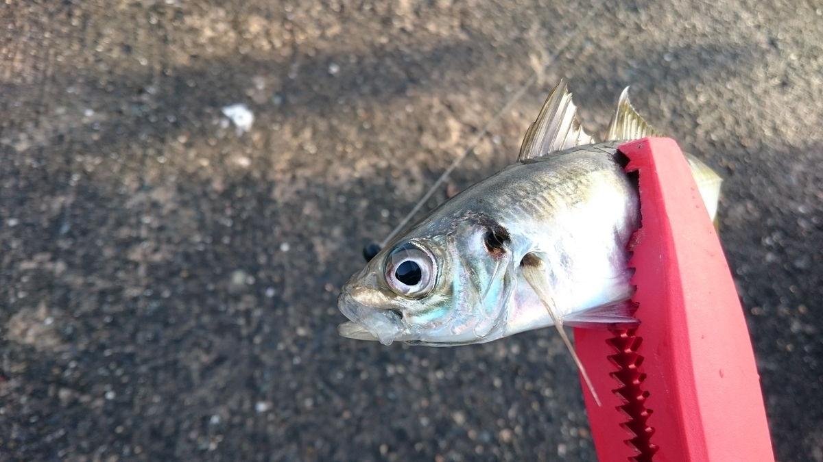 f:id:berao-setouchi-fishing:20200323005309j:plain