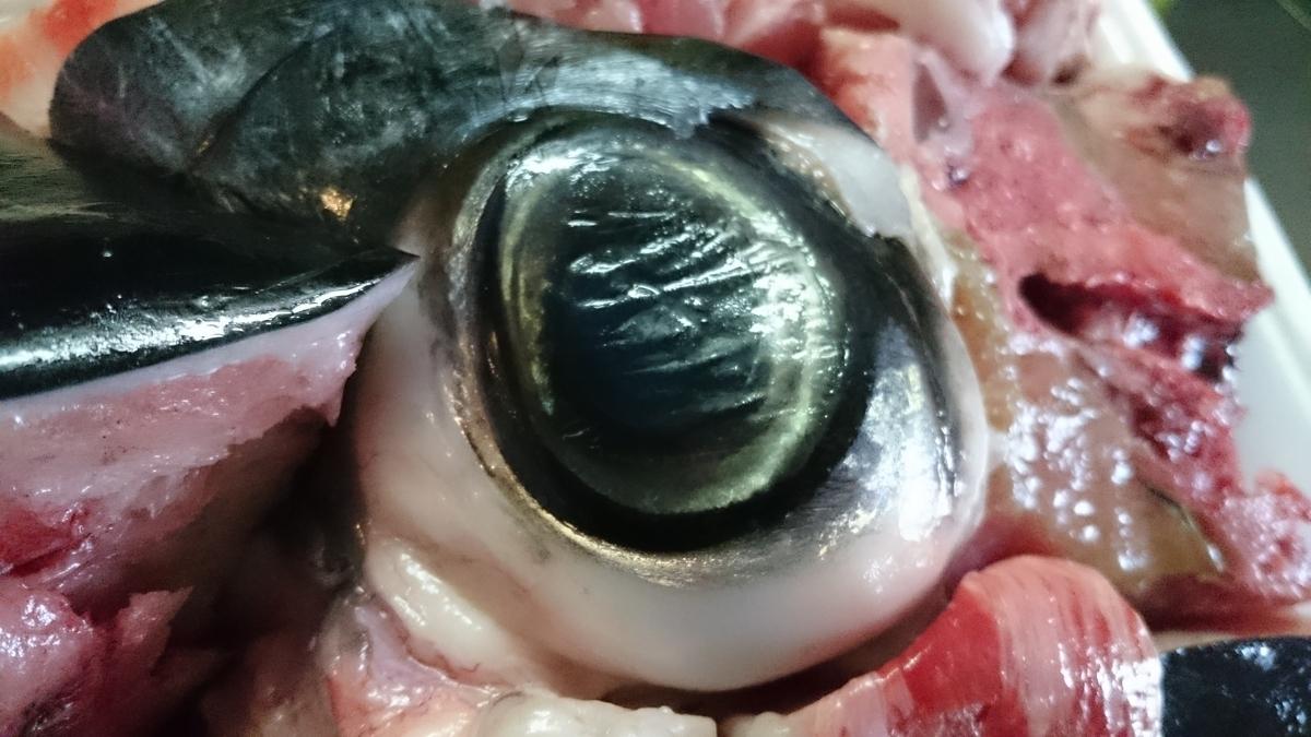 f:id:berao-setouchi-fishing:20200524145948j:plain