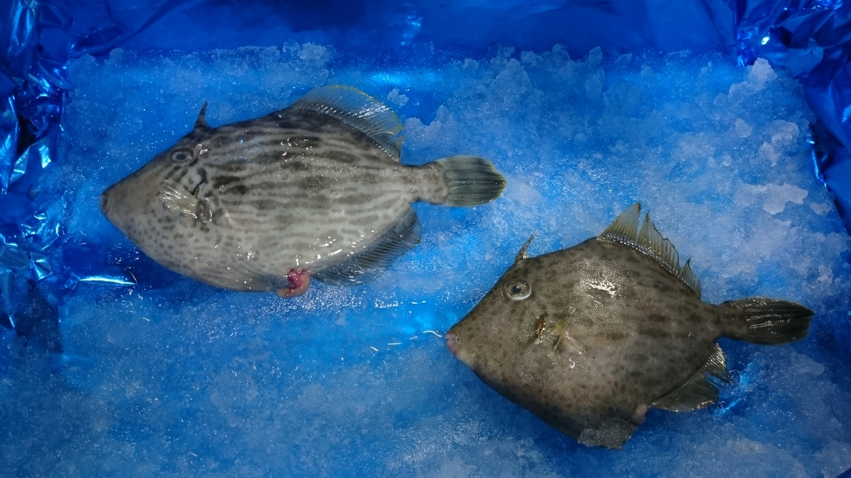 f:id:berao-setouchi-fishing:20200603220525j:plain