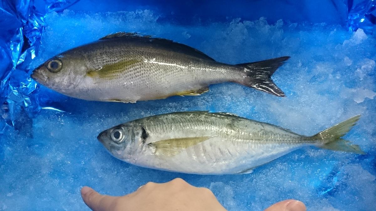 f:id:berao-setouchi-fishing:20200603220541j:plain