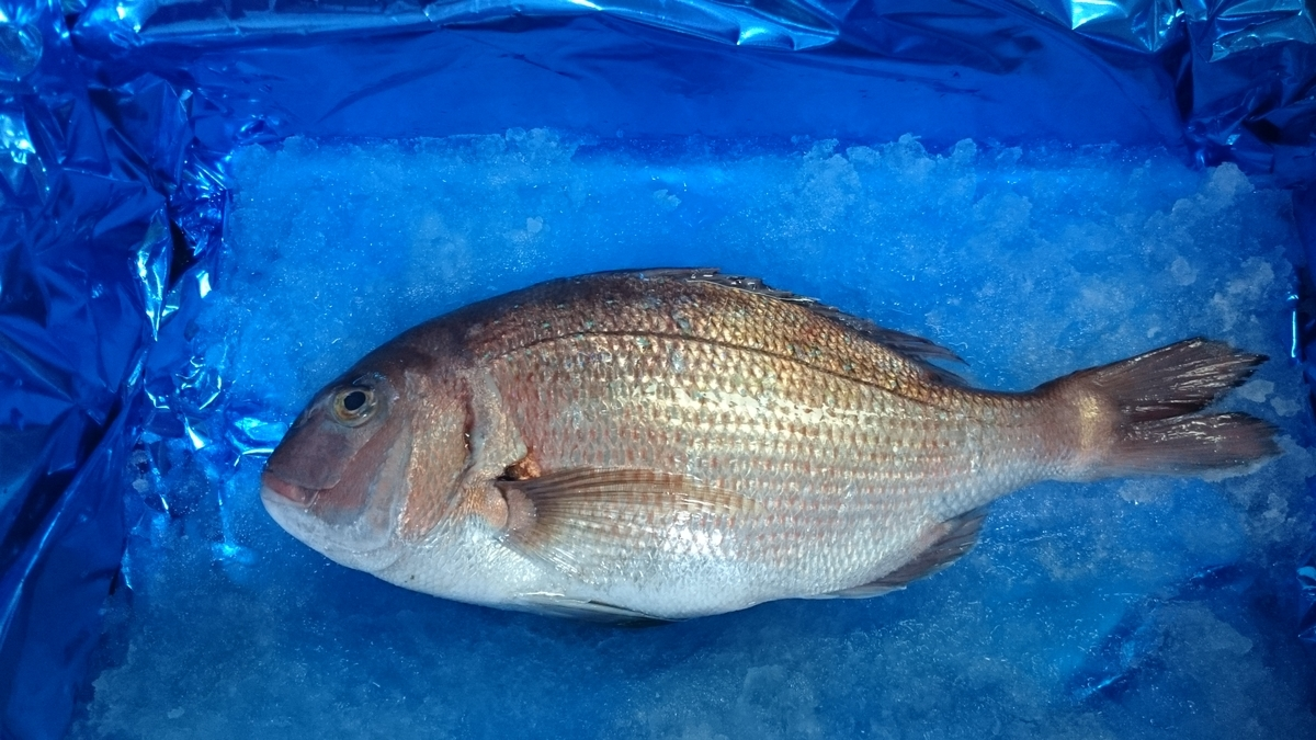f:id:berao-setouchi-fishing:20200603220547j:plain