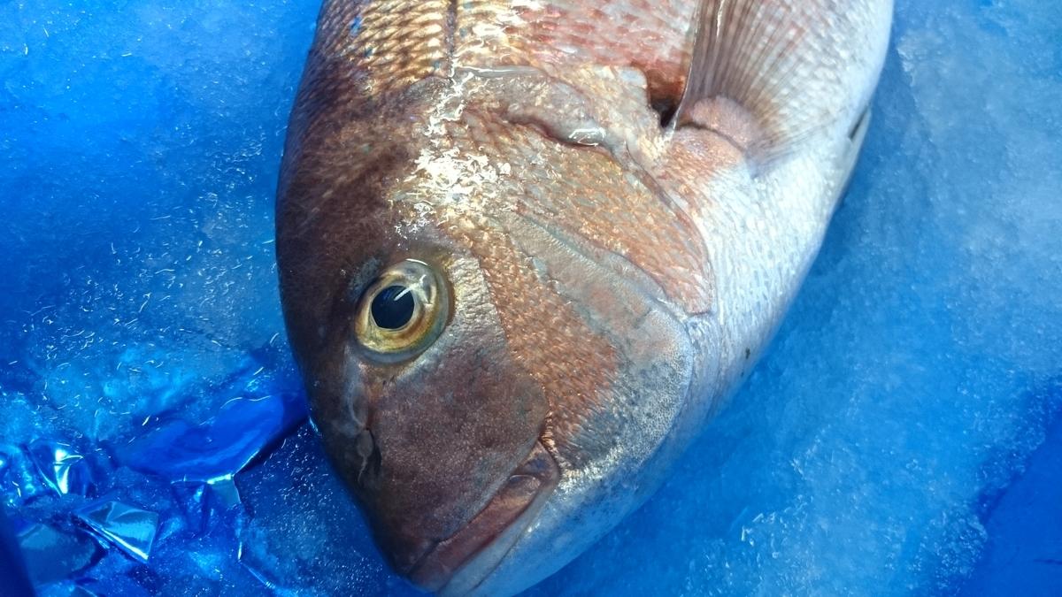 f:id:berao-setouchi-fishing:20200603220556j:plain