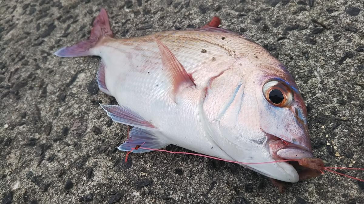 f:id:berao-setouchi-fishing:20200613163514j:plain