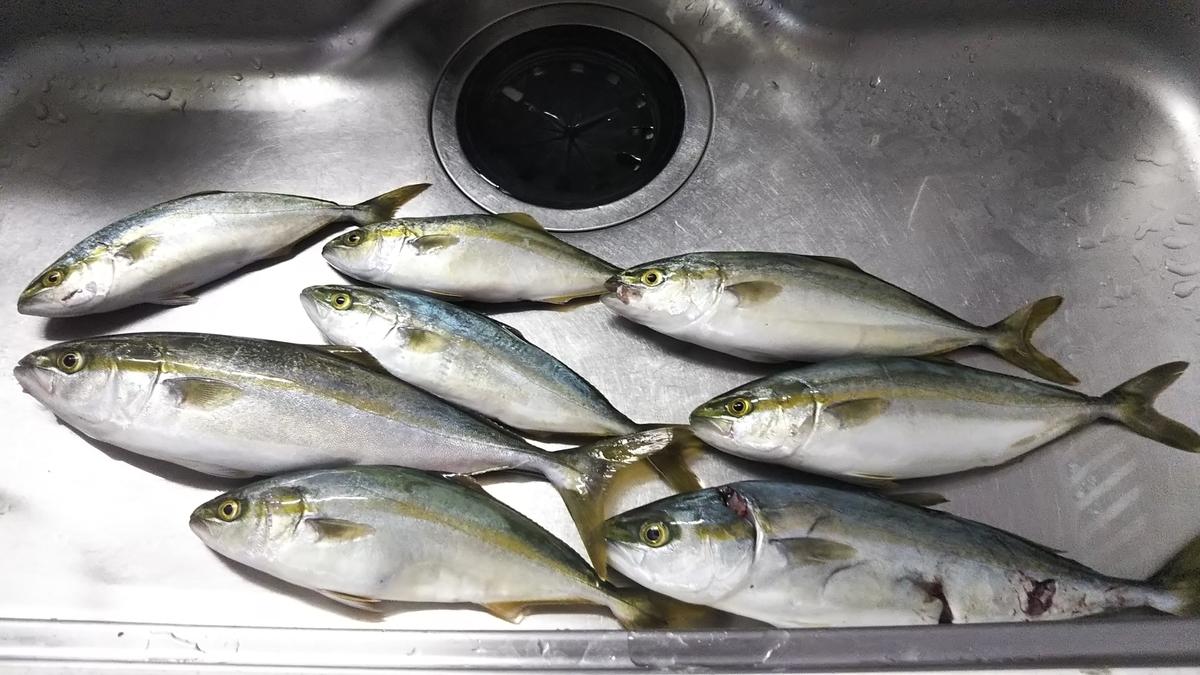 f:id:berao-setouchi-fishing:20200616204806j:plain