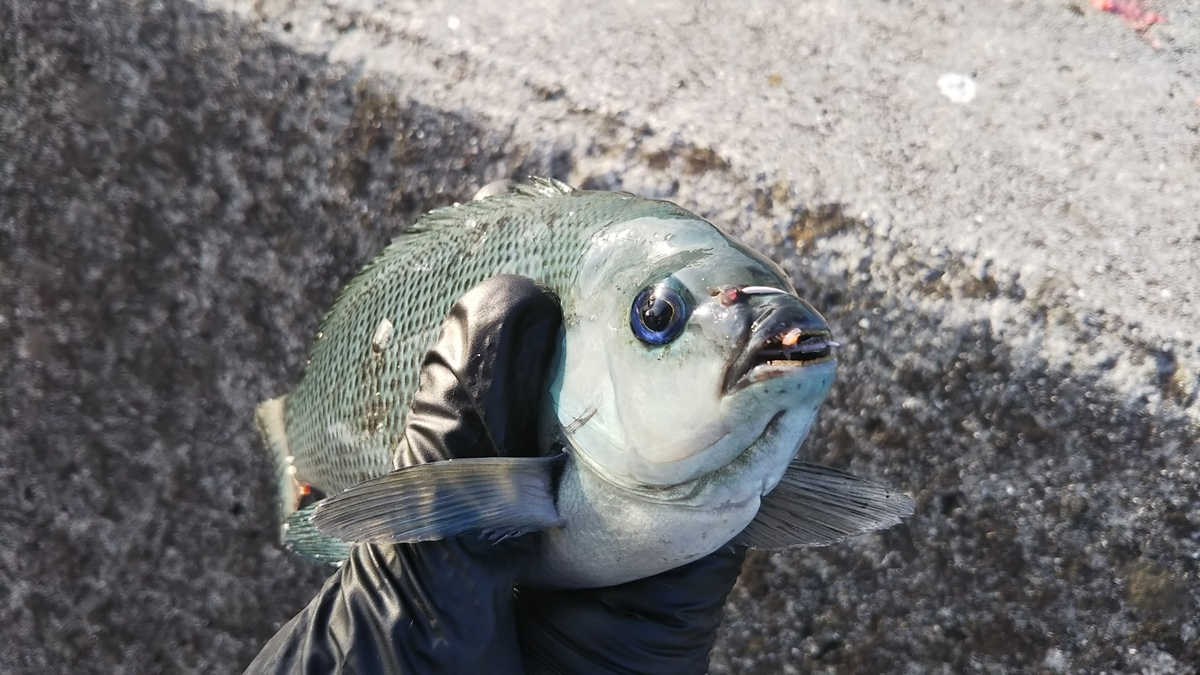 f:id:berao-setouchi-fishing:20200616210622j:plain