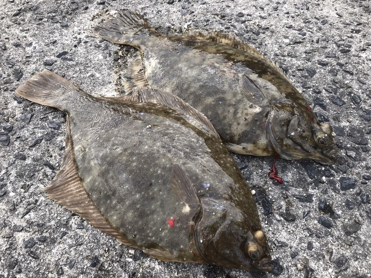 f:id:berao-setouchi-fishing:20200616211824j:plain