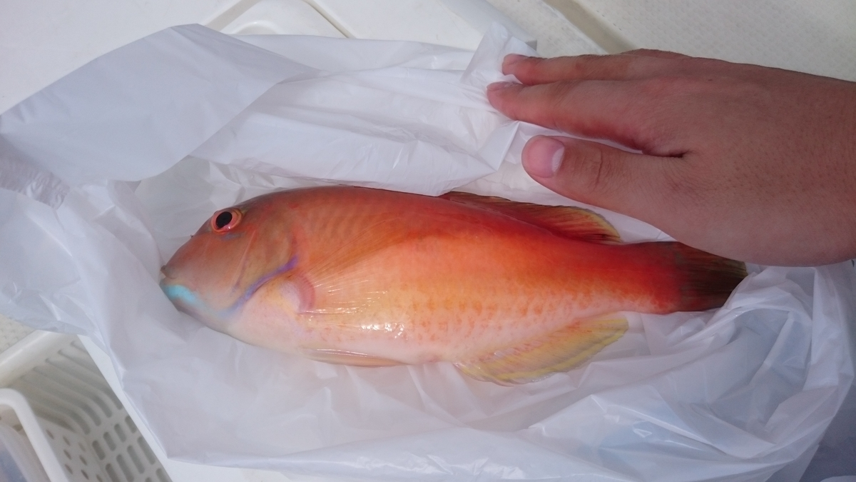 f:id:berao-setouchi-fishing:20200712224612j:plain