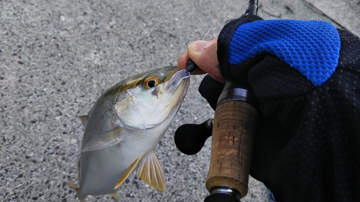 f:id:berao-setouchi-fishing:20200807081809j:plain