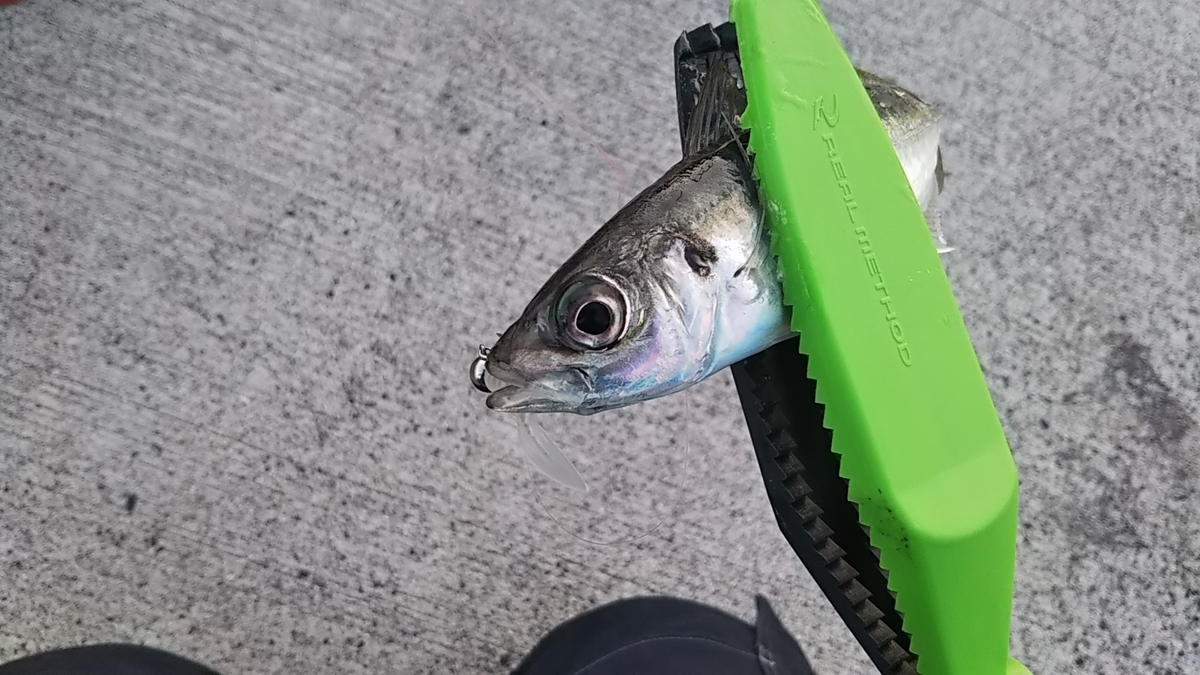 f:id:berao-setouchi-fishing:20200807082359j:plain