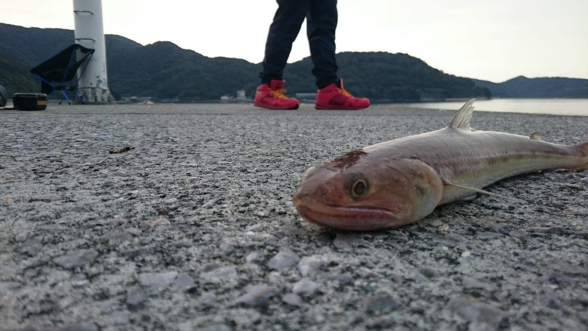 f:id:berao-setouchi-fishing:20201004224215j:plain