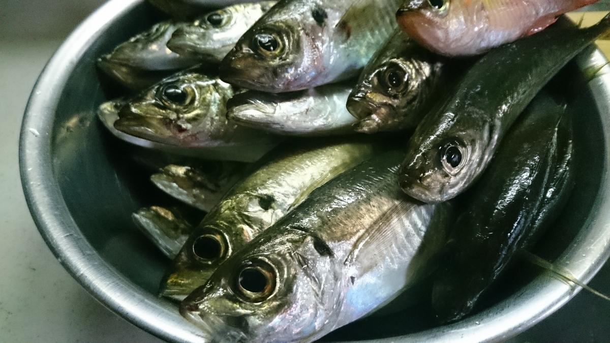 f:id:berao-setouchi-fishing:20201105190447j:plain