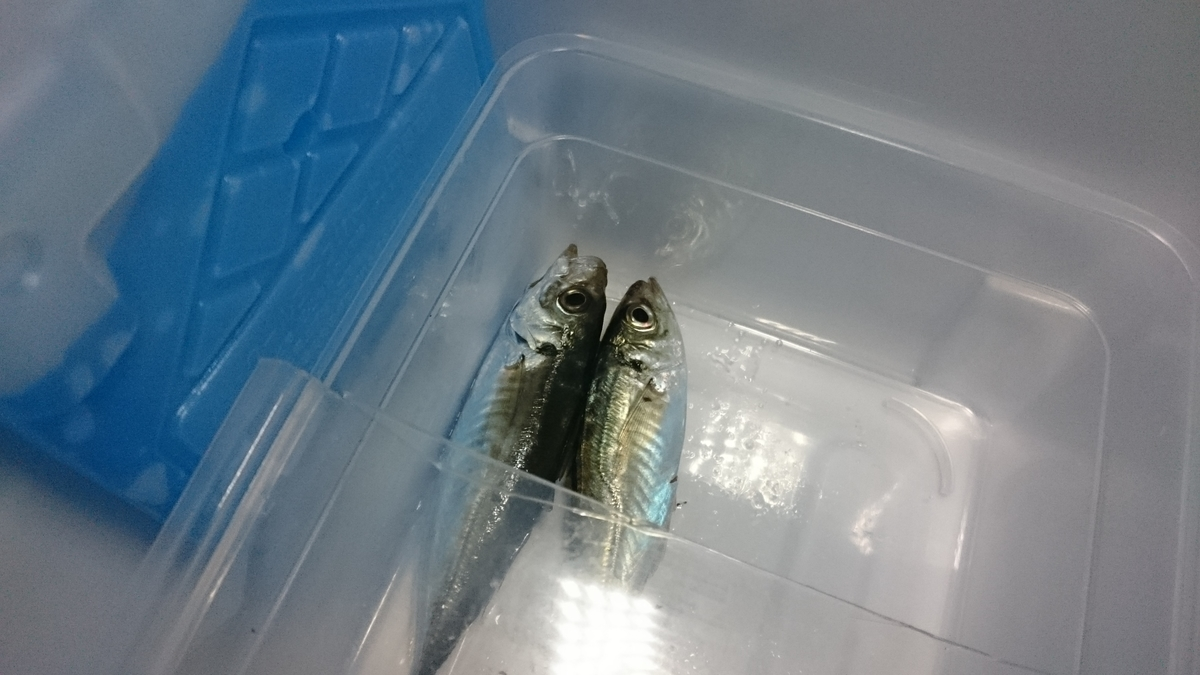 f:id:berao-setouchi-fishing:20201123155813j:plain