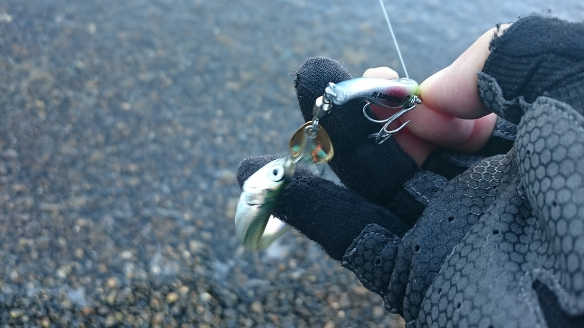 f:id:berao-setouchi-fishing:20201123155916j:plain