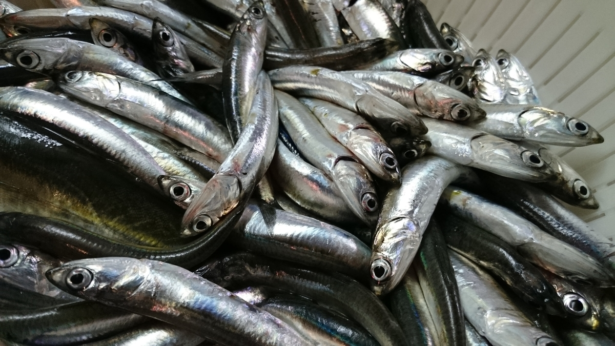 f:id:berao-setouchi-fishing:20201123160019j:plain