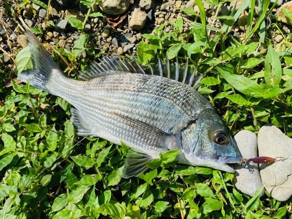 f:id:berao-setouchi-fishing:20201208212415j:plain