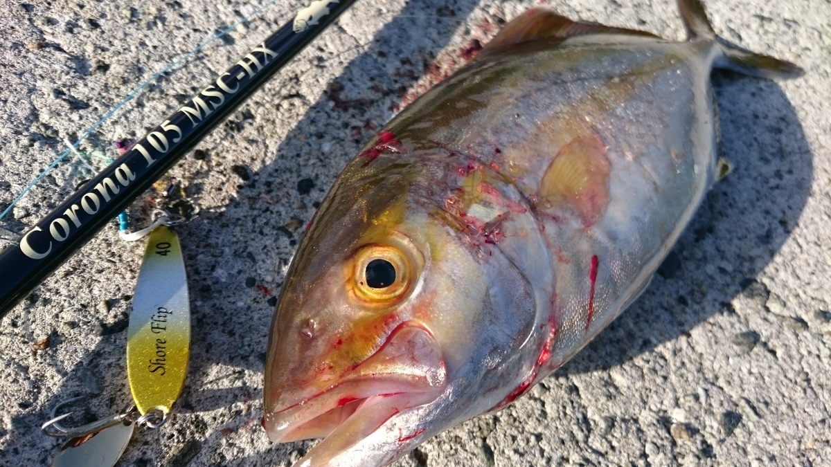 f:id:berao-setouchi-fishing:20201230114733j:plain