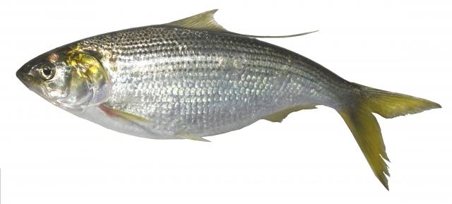 f:id:berao-setouchi-fishing:20201231115003j:plain