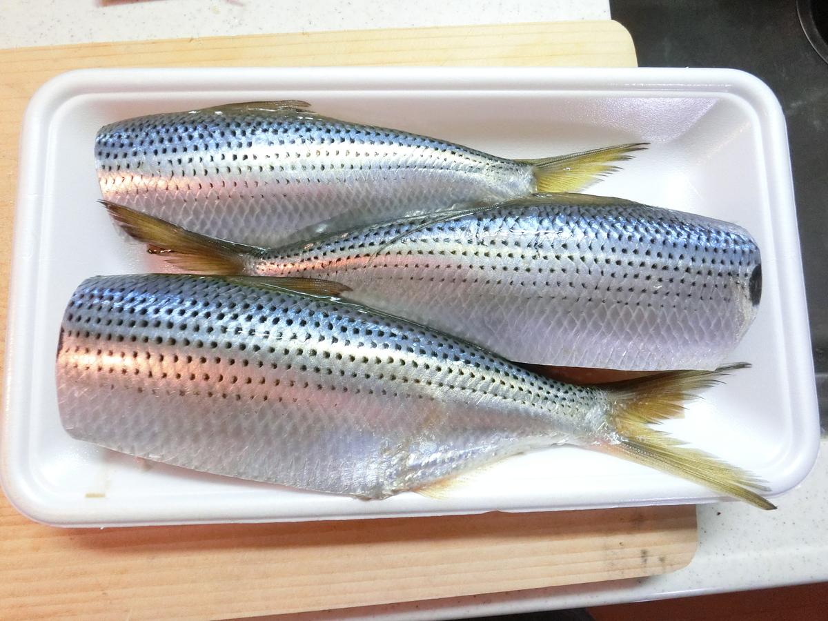 f:id:berao-setouchi-fishing:20201231115034j:plain