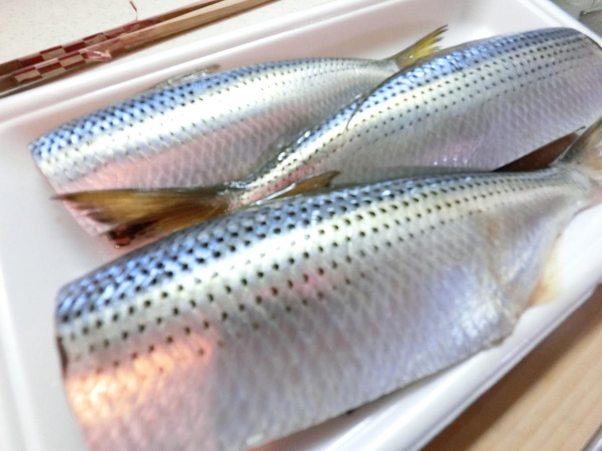 f:id:berao-setouchi-fishing:20201231115041j:plain
