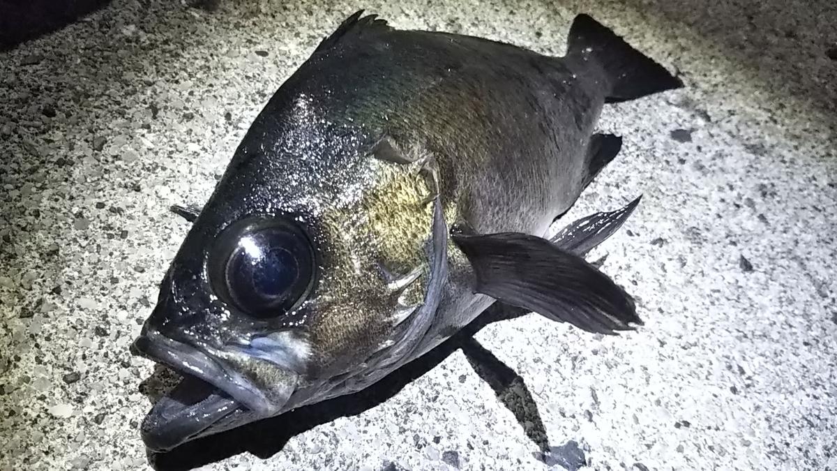 f:id:berao-setouchi-fishing:20210101115334j:plain