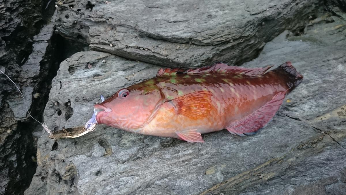 f:id:berao-setouchi-fishing:20210102104257j:plain