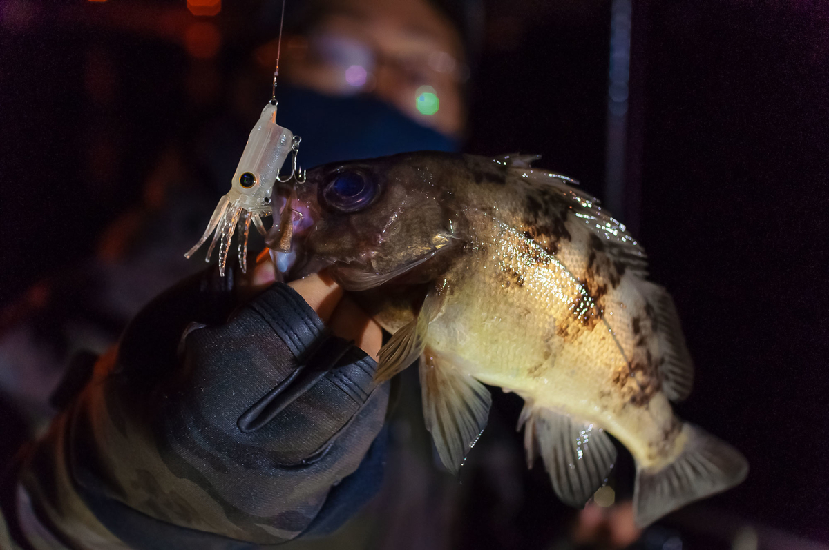 f:id:berao-setouchi-fishing:20210125193355j:plain