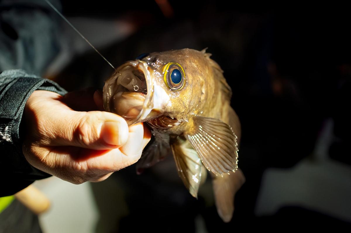 f:id:berao-setouchi-fishing:20210125202450j:plain